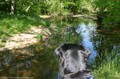 dog-in-awe-of-all-this-water.jpg