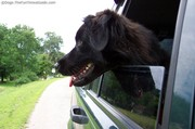 dog-sticking-his-head-out-the-window2.jpg