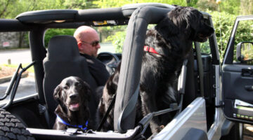 Tips For Dogs Riding In Cars & Jeeps