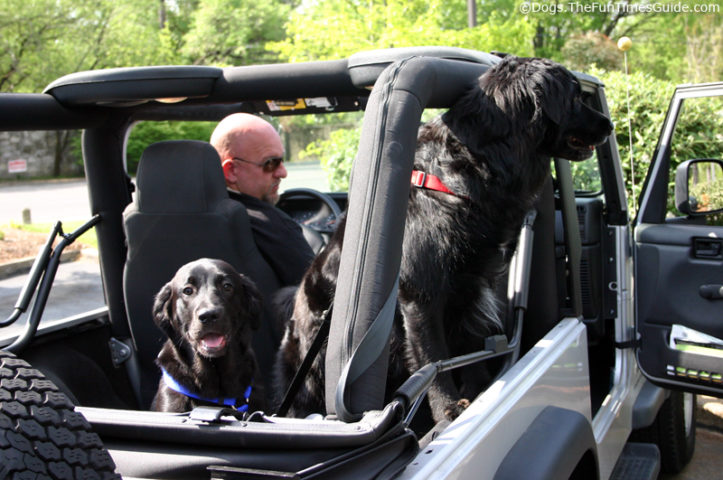 tips for dogs riding in cars jeeps fun times guide to jeeping. Black Bedroom Furniture Sets. Home Design Ideas
