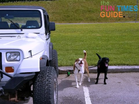 jeep dogs ready to go offroad