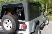 Dogs Love Jeeps!  Tenor Is A Jeep Dog… In Training