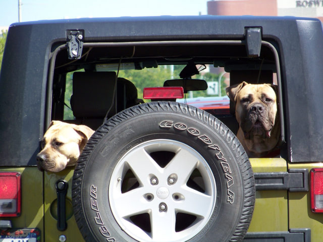 Jeep Soft Tops >> One-Of-A-Kind Jeep Toys For Jeep Dogs | The Jeep Guide