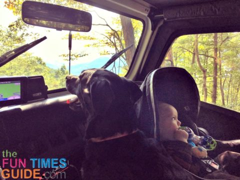 dog and baby jeep day