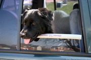 our-dog-using-the-comfort-cruiser-chin-rest.jpg