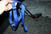 showing-the-dog-harness-connected-to-seatbelt-adapter.jpg