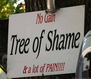tree-of-shame-no-gain-and-a-lot-of-pain.jpg
