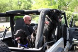 two-dogs-in-jeep-wrangler.jpg
